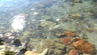 vlcsnap-2017-01-28-06h43m46s863