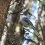 Ziemlich zutraulicher Vogel, Kanada