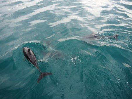 Wir schwammen mit Delfinen im Meer in der freien Natur
