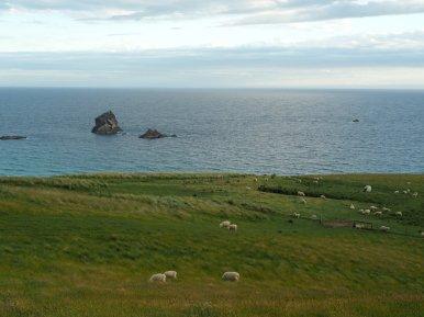 Schaflandschaft
