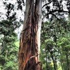 Interessante Baumtruktur