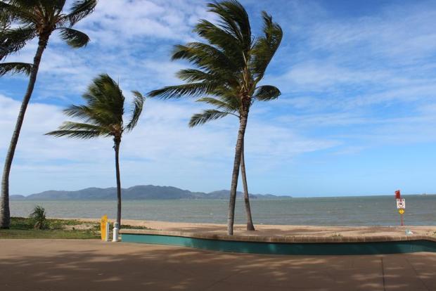 Palmen in Australien