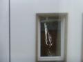 Swissotel - Vogelkot an Fenster