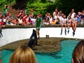 Zoo Wuppertal - Seelöwen Fütterung