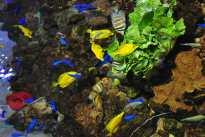 Buntes Gewusel unter Wasser, nein, tauchen habe ich noch nicht gelernt - Aquarium-Ausbeute