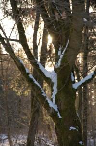 Die Frühlingssonne blinzelt durchs Geäst.
