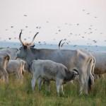 Neusiedler See: Auf Safari durch die Steppe