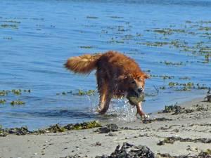 Ein Hund spielt mit einem Stein
