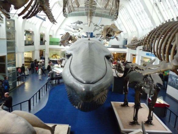 Bei den lebensgroßen Wal-Modellen