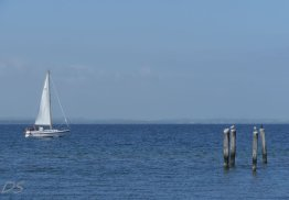 Segel und Meer