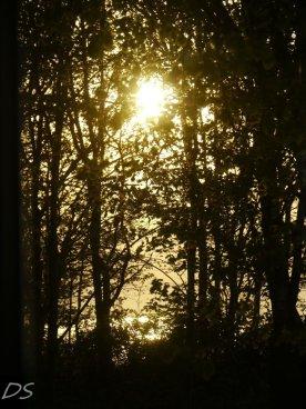 Sonnenuntergang hinter Bäumen auf Poel