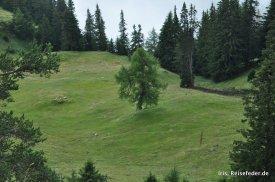 Edelweißsteig einsamer Baum
