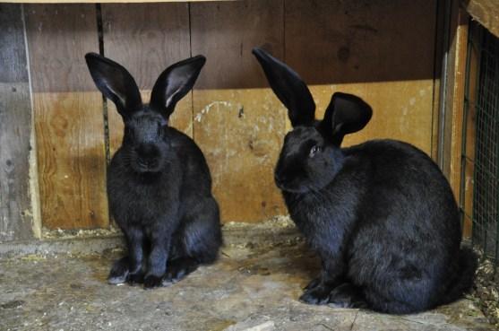 Tiererlebnispfad: Im Kaninchenstall,