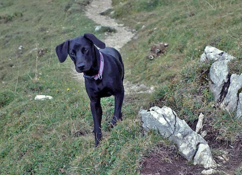 Tilda ist ein guter Berghund