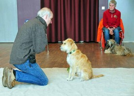 Hansi und Justus (Hund) sind ein begabtes Team