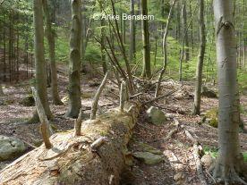 Nationalpark Harz: Holz darf liegen bleiben