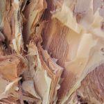 Australien: Papier und Gekritzel frisch vom Baum