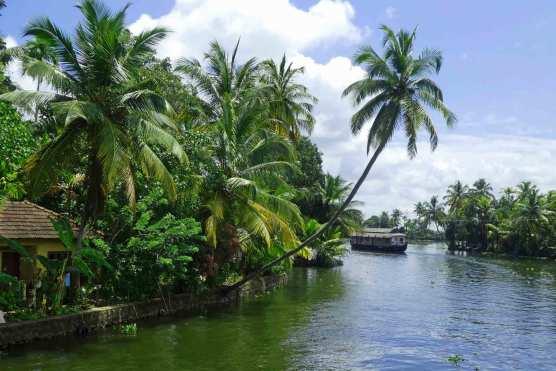 Wasser, Palmen und Boote