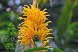 Herrlich gelb diese Blume