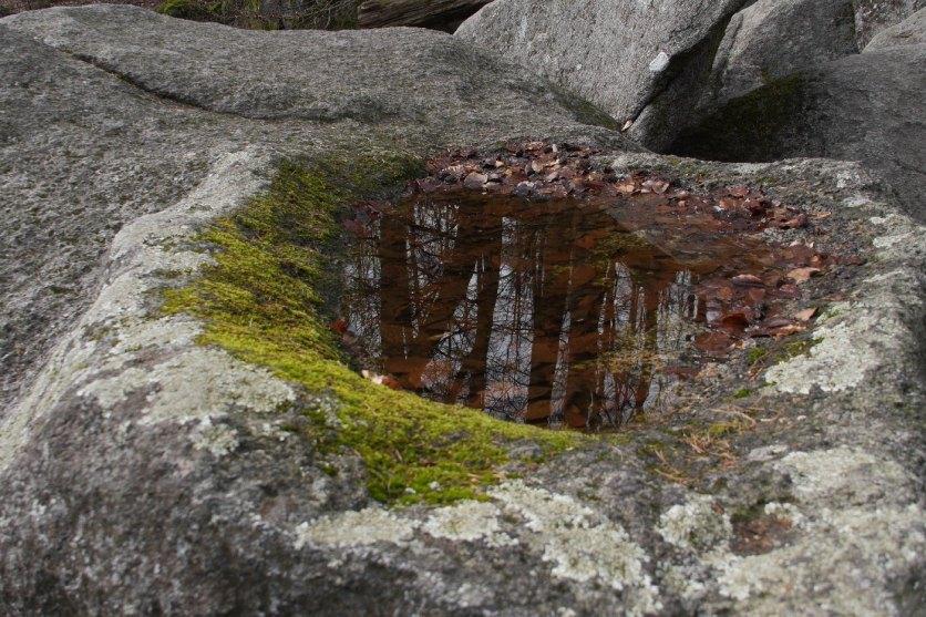 Frei nach Escher: In den Pfützen spiegelt sich der ganze Wald...