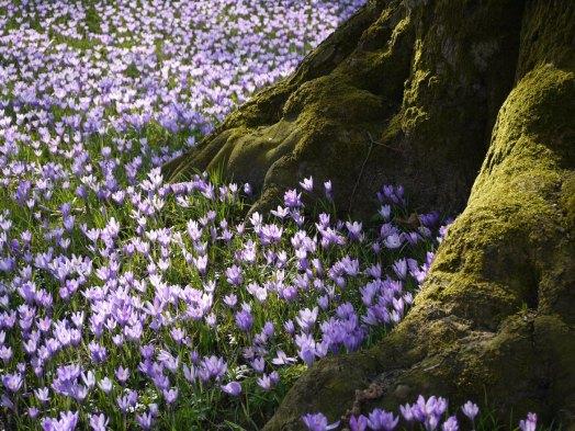 Blüten vor Baumwurzel