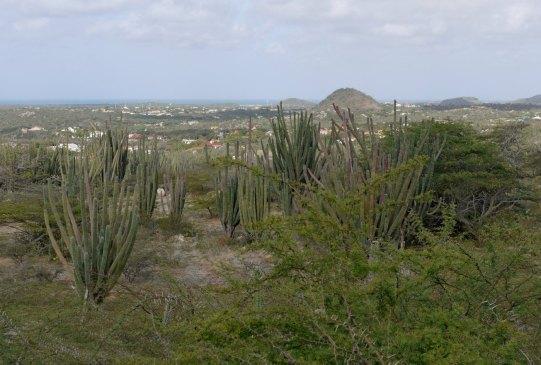 Aruba-ABC-Inseln-ABC-A-18-Nationalpark_Inselinneres_1k4