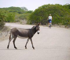 Bonaire-ABC-Inseln-ABC-B-04-Inselzentrum_1k4