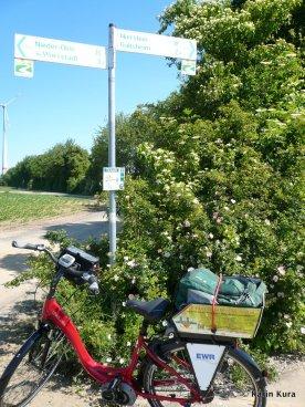 Rheinhessen. Kura (2)