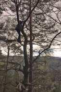 Ein Kind klettert in der Baumkrone im Ellbsandsteingebirge