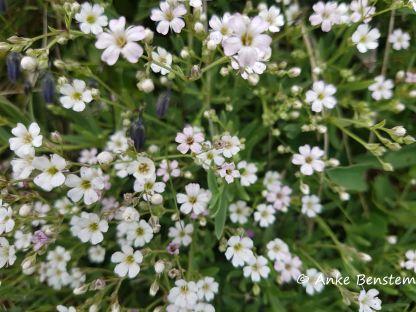 Alpenblumen in der Schlick 2000_2_Reisefeder