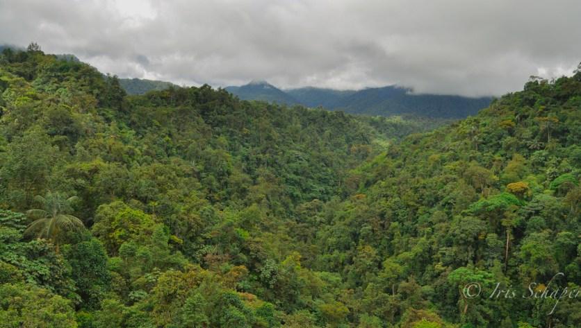 In der Seilbahn über dem Nebelwald von Mindo