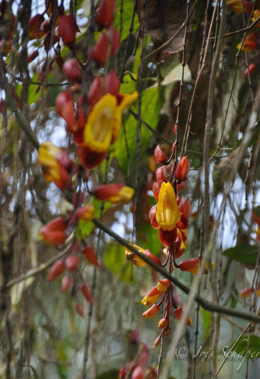 Orchideen im Nebelwald