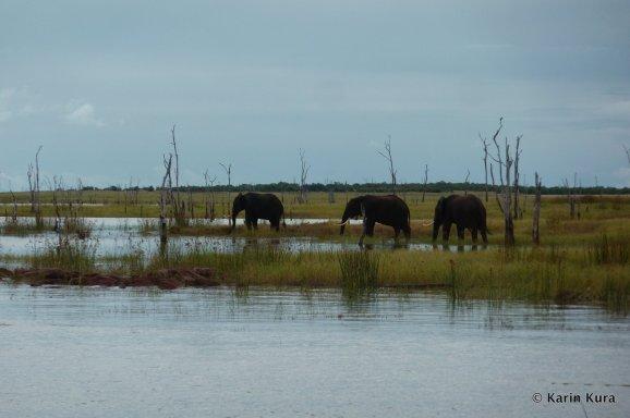 Elefantengruppe am Seeufer. Kura
