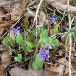In den Frühlingswald eintauchen
