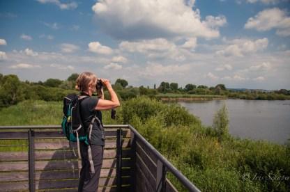 Auf dem Vogelbeobachtungsturm Altmühlsee