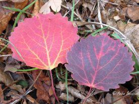 Bunte Herbstschönheiten