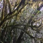 Im feuchten Atem Gottes – mystischer Nebelwald auf La Gomera