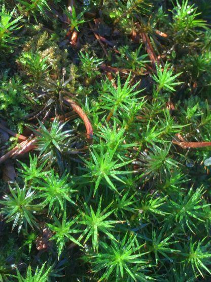 14 Harz Schnarcherklippen Benstem Reisefeder Natur wandern