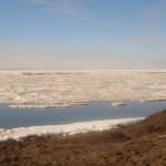 Alaska: Wo die Robben schnell abtauchen