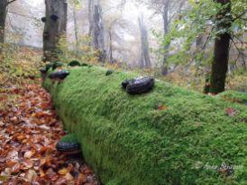 Benstem Reisefeder Hunsrück Laub Herbst Moos 1