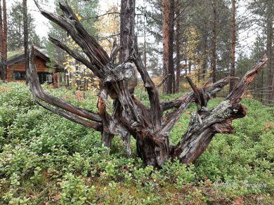 5 Engholm Husky-Lodge Norwegen Finnmark Benstem Reisefeder