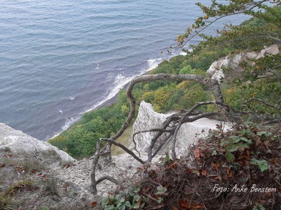 5 Reisefeder Jasmund Benstem Nationalpark