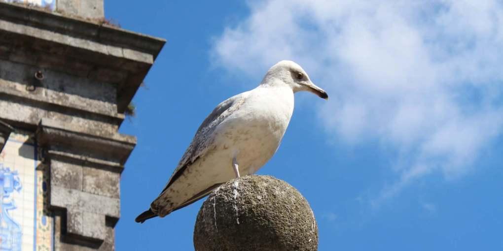 portugal-porto-Church-of-Saint-Ildefonso-bird-reisefreiheit