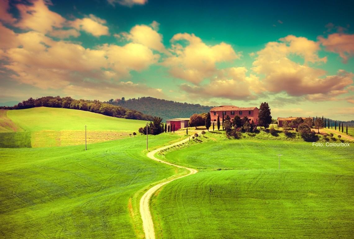 Grønne bølgende åser i toscana med vingård