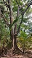61 - tayrona nationalpark_kolumbien (576x1024)