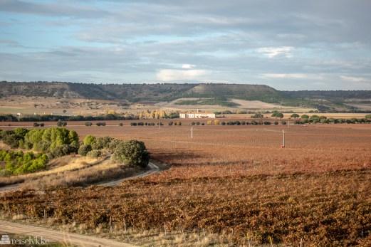 Vinmarker Abadía Retuerta Le Domaine ved Ribera del Duero