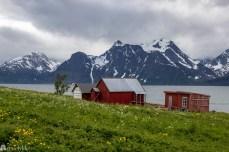 Røde hus i Lyngen