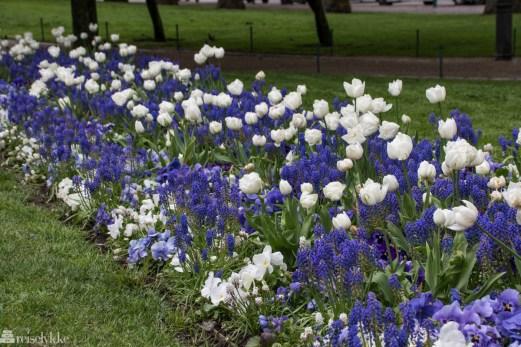 Blomster i Helsinki