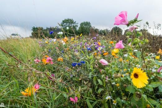 Blomstereng Bornholm