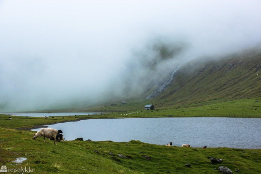 Færøyene - der naturen bestemmer